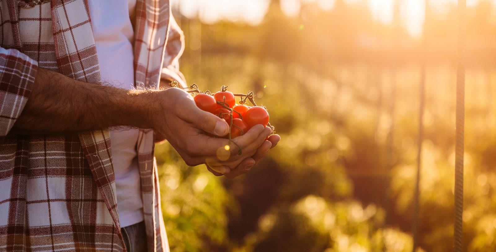 fruits-et-legume-fruiterie-toit-rouge-slider